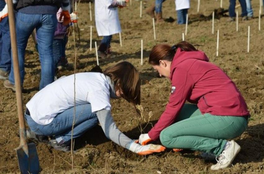 100 de copaci pentru 100 de ani de la Unire