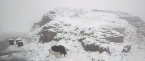 Video! Sfârșit de iunie cu zăpadă în munții Făgăraș: A nins pe Transfăgărășan!