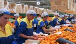 150 locuri de muncă în domeniul agricol (recoltare, ambalare fructe) în Spania prin intermediul Reţelei EURES. Vezi cât se poate câștiga pe oră