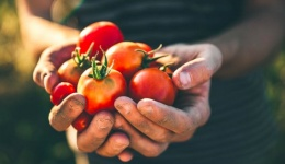 Drăghici: Grație fondurilor de la APIA, numărul fermierilor care produc eco a crescut spectaculos